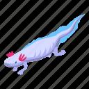 water, salamander, isometric