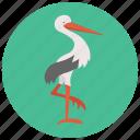 baby, bird icon