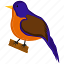 bird, nature, pigeon