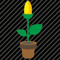 bud, flower, plant, pot, yellow icon