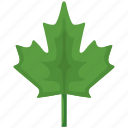 canada, green, leaf, nature, plant icon