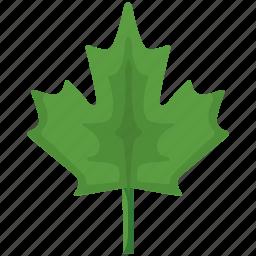 canada, green, leaf, nature, plant icon