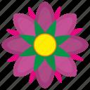 bud, flower, grow, plant, rose