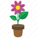 flower, grow, plant, pot icon