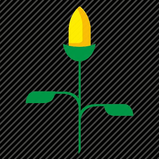 bud, ear, flower, plant, yellow icon