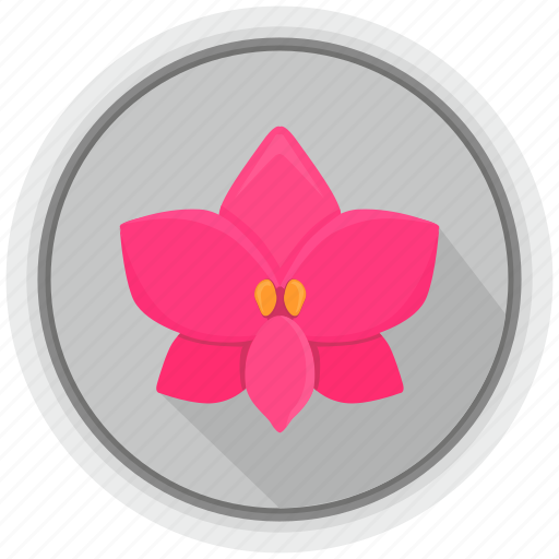 bud, flower, orchid, round icon