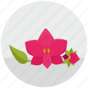 bud, flower, orchid, plant, round