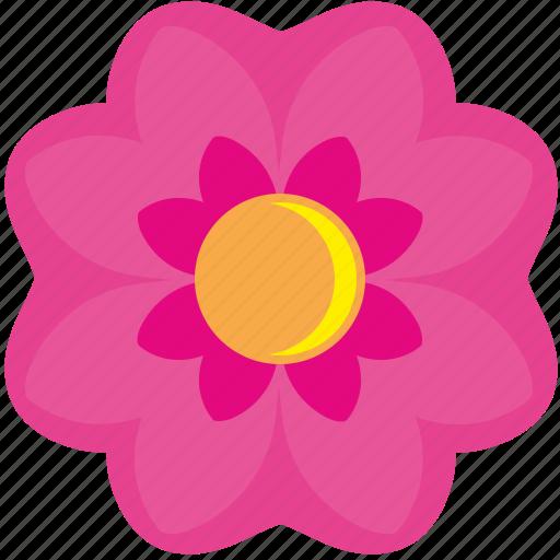 bud, china, flower, plant, rose icon