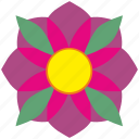 astra, bud, flower, rose icon