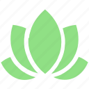 american lotus, beauty, flower, green, harmony, lotus, nature, plant, relax, relaxation, spa, wellness, wild spring flower, yoga