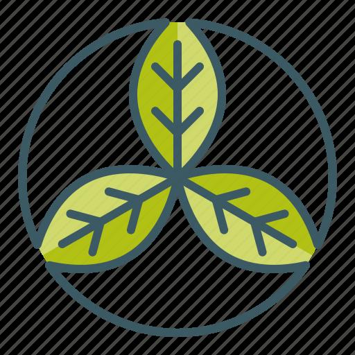 circle, leaf, natural, organic, trinity icon