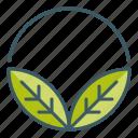 circle, leaves, natural, organic