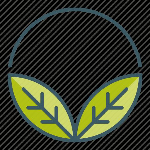 circle, leaves, natural, organic icon