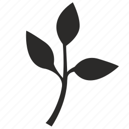 biology, plant, science icon