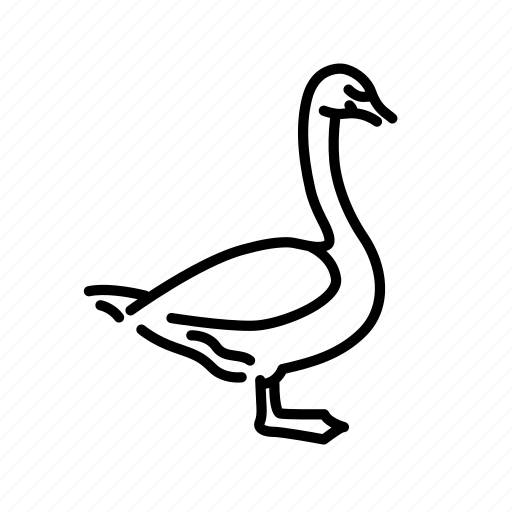 animal, bird, black swan, nature, swan, wild icon