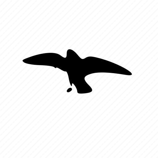 animal, bird, crow icon