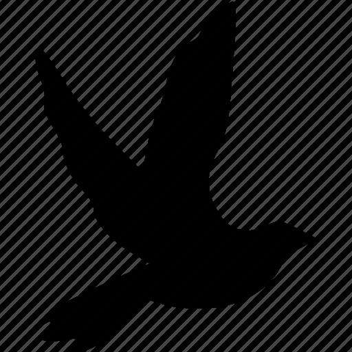 animal, bird, dove icon
