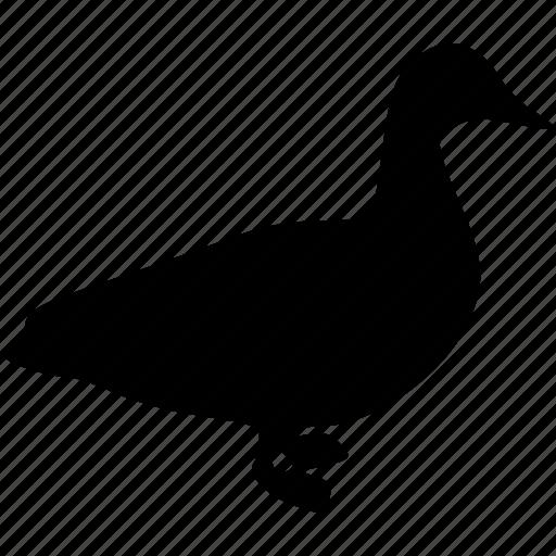 animal, bird, duck icon