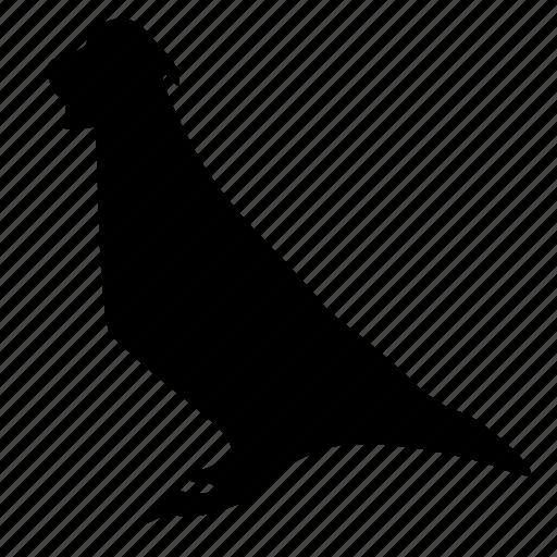 animal, bird, pigeon icon