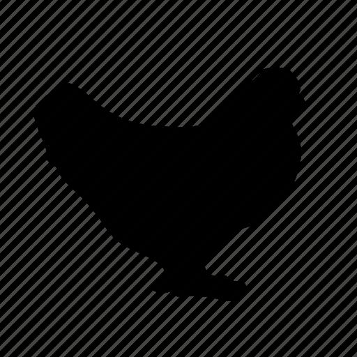 animal, bird, hen icon