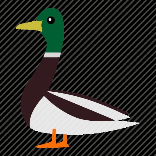 duck, duckling, mallard icon