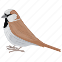bird, house sparrow, passerine, sparrow, true sparrow icon