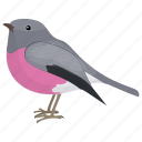 bird, colorful bird, petroica rodinogaster, pink robin, tasmania bird icon