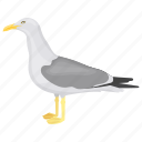 bird, gull, laridae, seabird, seagull icon