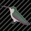 common guillemot, common murre, sea bird, seashore bird, uria aalge icon