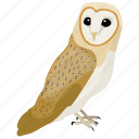 animal, barn owl, bird, owl, prey bird