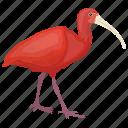 bird, brazil bird, colombia bird, ibis species, scarlet ibis icon