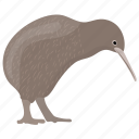 animal, bird, flightless bird, kiwi, kiwi bird icon