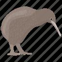 animal, bird, flightless bird, kiwi, kiwi bird icon