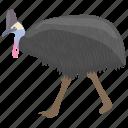australian cassowary, bird, cassowary, southern cassowary icon