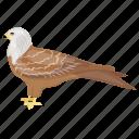 bird, desert bird, falcon, prey bird, wildlife icon