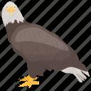 african eagle, eagle, fish eagle, bird, haliaeetus vocifer