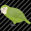 bird, bright-green parrot, monk parakeet, parrot, quaker parrot icon