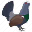 capercaillie, heather cock, tetrao urogallus, western capercaillie, wood grouse icon