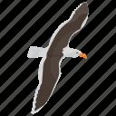 bird, erne, flying eagle, prey bird, sea eagle