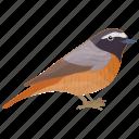 european robin, songbird, american robin, robin, bird