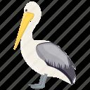 australian pelicans, bird, large bird, pelicans, water bird icon