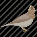 alauda arvensis, alauda gulgula, bird, passerine bird, skylark icon