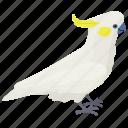 bird, cockatoo, intelligent bird, sulphur-crested cockatoo, white cockatoo icon