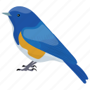 bird, bluebirds, male bluebird, passerine, songbird icon