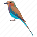 bird, colorful bird, passerine bird, red-cheeked cordon bleu, uraeginthus bengalus icon