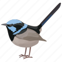 bird, blue wren, malurus cyaneus, passerine bird, superb fairywren icon