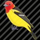 aethopyga gouldiae, gould's sunbird, sunbird, bird, sunbird female