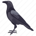 bird, blackbird, corvus, crow, raven crow icon