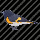 bird, cacicus cela, passerine bird, small bird, yellow-rumped cacique icon