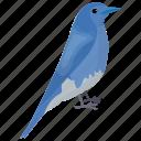 aphelocoma wollweberi, bird, mexican jay, small bird, wildlife icon